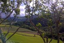 Bolognashire