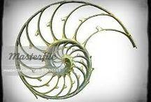 Nautilus-Fibonacci