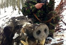 Hunting in Romania / Hunting Trophies
