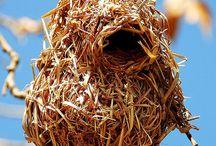 Nests / by Andrea Zampitella