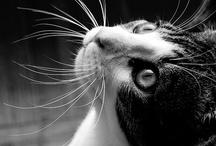 Cat-Horse-Content
