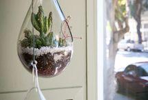 Idee per piante grasse
