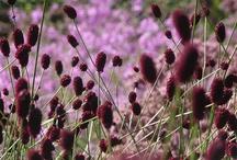...garden inspirations