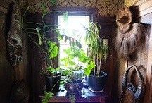 Plant Life / ideas for plants in and around the home