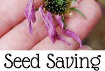 Samle frø av blomster