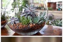 Pflanzen Ideen