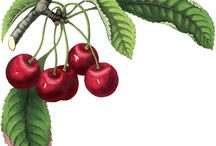 Deco-transf.owoce