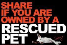 Rescue Pets!