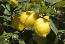 Citrus care
