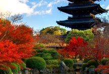 Japan! / Happiness is... the thought of visiting Japan in cherry blossom season!