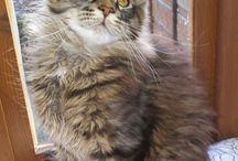 kedi yavrusu