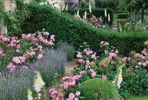 Sue G / Cottage garden with evergreen structural plants