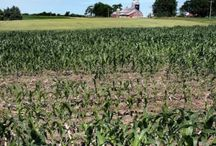 Agriculture - Crops & Soils / by Dodge County UW-Extension