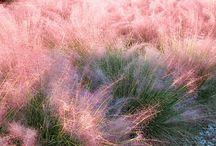 No Mow Grasses