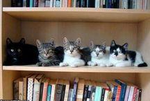 tener gatos en mi casa