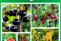garden- fruit