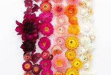 Flower Power / by Nikki Novo