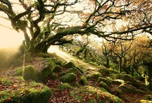 Moss / My obsession with the wonderful world of moss / by Kate Nichols