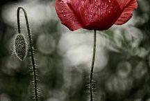 2-Цветы
