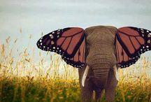 elefantemariposa
