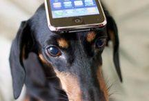 mobile balance