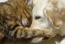 Awwww (Cute Pets) / Because ya gotta have some cute! / by A.E. Tyree