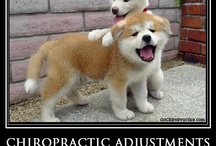 Veterinary Chiropractic Adjustments / Natchez Trace Veterinary Services offers alternative medicine including chiropractic adjustments. Dr. Marc Smith, DVM has adjusted horses, cats, and dogs in his career as a veterinarian.