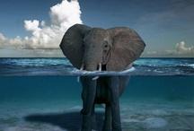 Elephant Love / by Jennifer Treviño