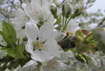 Les jolies couleurs des fleurs au printemps