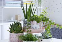 Plants / Indoor and Outdoor Plants, Garden