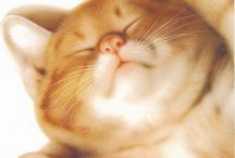 Котики в картинках