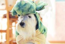 A Scottie Halloween / Spooktacular photos of Scottish Terriers in costume + Scottie Halloween decor.