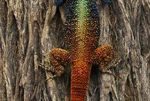 lizard tails