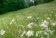 Bludenz, Austria