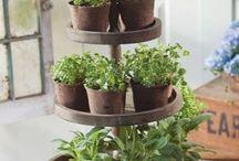 Winter Herb Garden