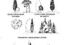 Ландшафтные группы