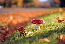 Háttér-ősz