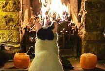 Cats / Anche il più piccolo dei felini, il gatto, è un capolavoro.    L. Da Vinci