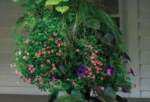 Ornamental Planting