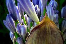 hobby e fai da te / Interessi condivisi con le amiche.Buon pomeriggio , quest'oggi io e le altre cartomanti abbiamo  provato ad essicare dei fiori dai petali rosa succosi, al microonde. Le mie colleghe della casa azzurra apprezzano molto il risultato. Per consigli di vario tipo puoi contattare cartomante Valentina (a 0,80 cent/  al minuto + iva ) componi 899 62 62 45. Ti aspettiamo. www.cartomantevalentina.it