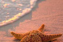 rybki, rozgwiazdy, meduzy i tak dalej