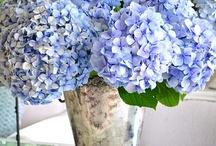 Цветы и украшение
