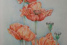 Flowers.Poppies