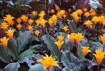 favourite  plants