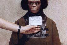 Monkeys Rule