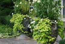 Courtyard / by Amy James. Hgt