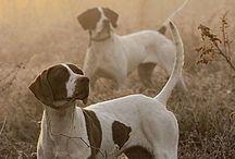 Animals {Dogs}