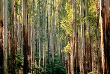 See and Do / Great places to visit see and do in the Yarra Valley and Dandenong Ranges.