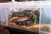 royal python set up