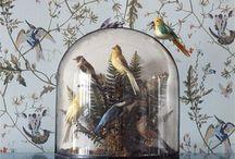 Птички Birds